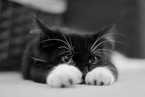 Kaķa degungals ir tikpat... Autors: SūduCentrs Kaķi vai citplanētieši?