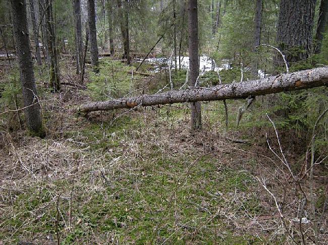 Tas ir ļoti vienkārši Vispirms... Autors: Dark Mist Kā uzbūvēt patvērumu mežā.