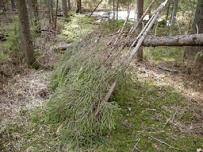 Autors: Dark Mist Kā uzbūvēt patvērumu mežā.