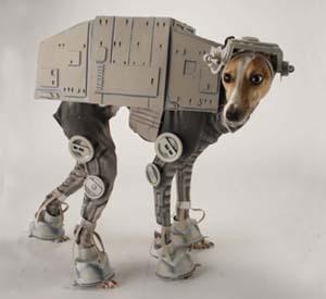 suņu  haloween kostīms Autors: chaiba frīcīgi izgudrojumi!