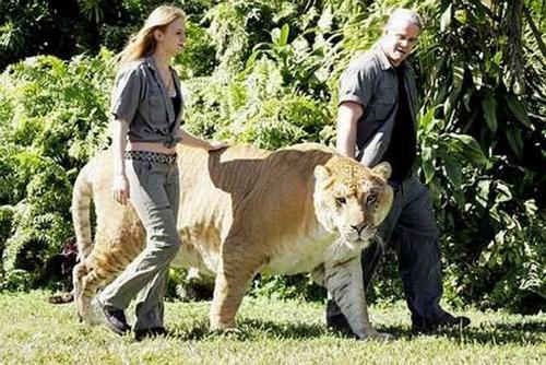 Autors: MiersBerzins 16 Lielākie dzīvnieki pasaulē