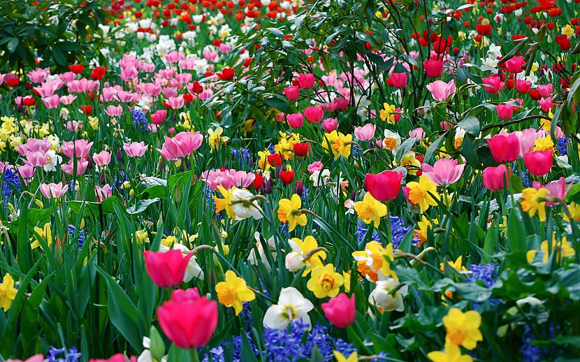 Autors: Labveelis13 Ziedi