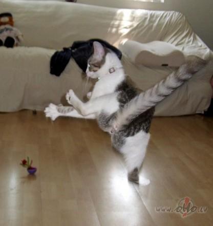 Autors: bonkers0 Smieklīgas bildes ar dzīvniekiem