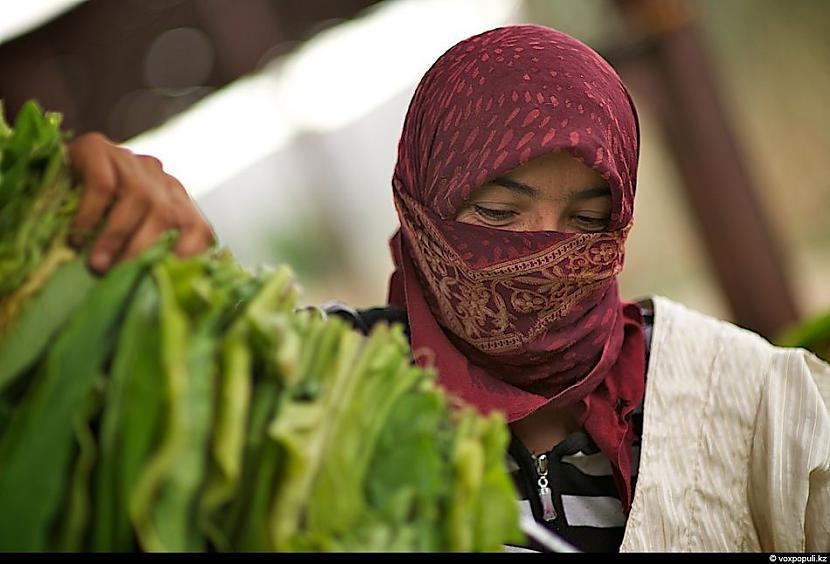 Sešu mēnešu laikā strādājot... Autors: Džordžs no Džungłiem Kā izaudzē tabaku ?