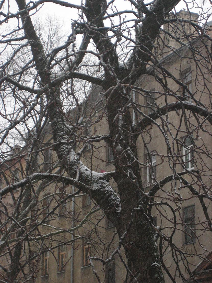 Autors: Susurinjs Uzsniga sniedziņš balts.