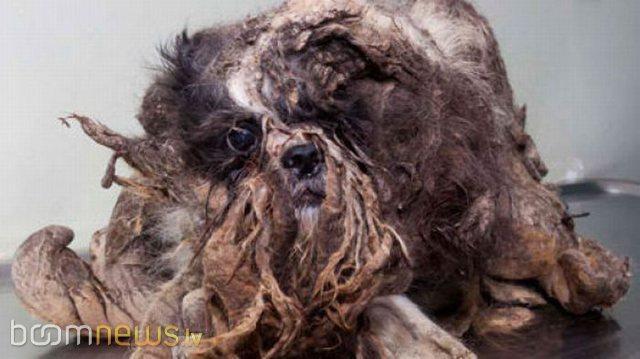 Autors: HokejHoliķis Kā no bomža izveidot suni?