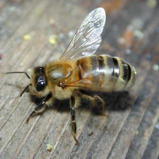 Katru gadu no bišu kodumiem... Autors: endyss49 Dažādi fakti