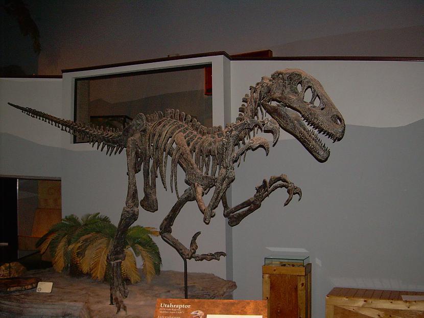 Jūtasraptors Autors: sekers Skeletori 2