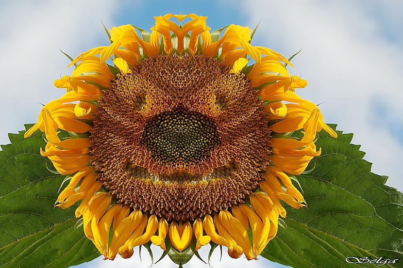 1 puķes smaids Autors: Peerle12 Uzsmaidi man! :)