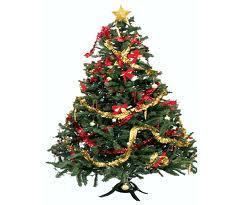Egle kā vienmēr zaļojošs koks... Autors: Monster energy Fakti par ziemassvetku eglītēm
