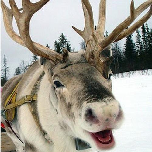 Ziemeļbriedis ZIEMEĻBRIEDIS... Autors: WeirdQes Kā es zinu, ka Santa Klauss neeksistē.?