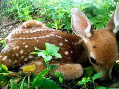 Autors: zazuks12 Dzīvnieki. ♥ 2