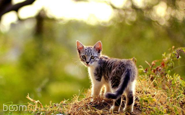 Autors: Baby16 Kaķīši