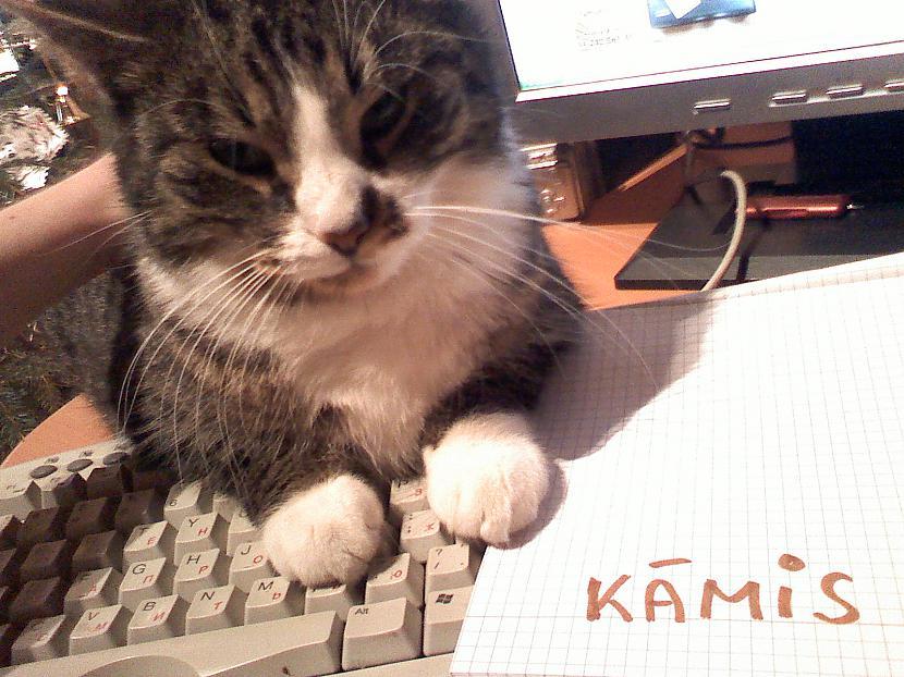 Autors: Kāmis Mājdzivnieks uz klaviatūras