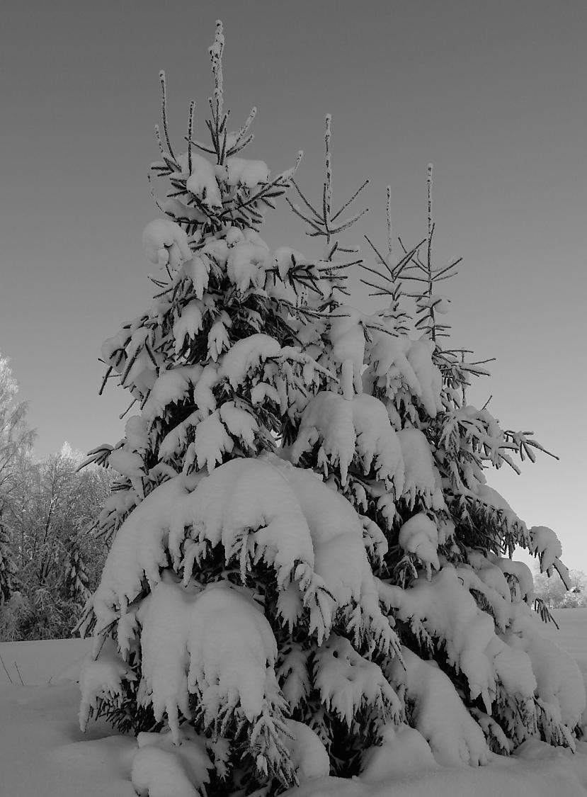 Foto by persona Autors: Persona Aukstā, baltā ziema...