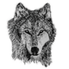 Grey Wolf avatars