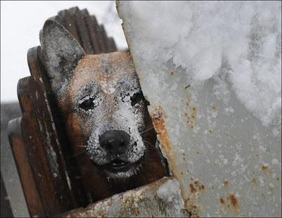 Autors: AldisTheGreat Sniega vētra Rumānijā.