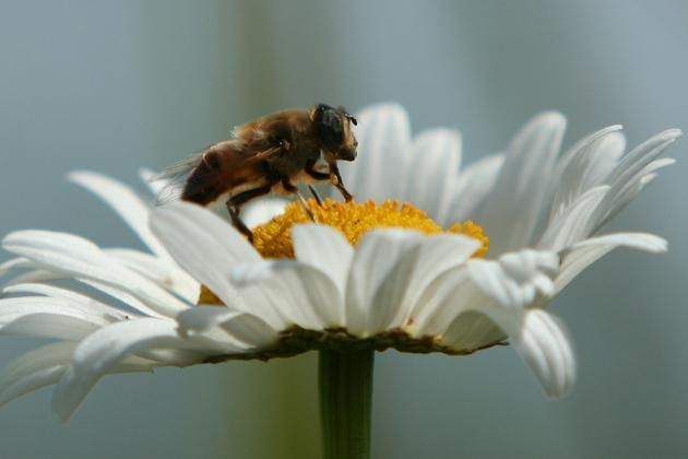 Bites var ievākt līdz 400 kg... Autors: kiksons 17 fakti par dzīvniekiem