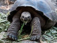 Visvecākais dzīvnieks ... Autors: Fosilija Dzīvnieki ar neparastām spējām!