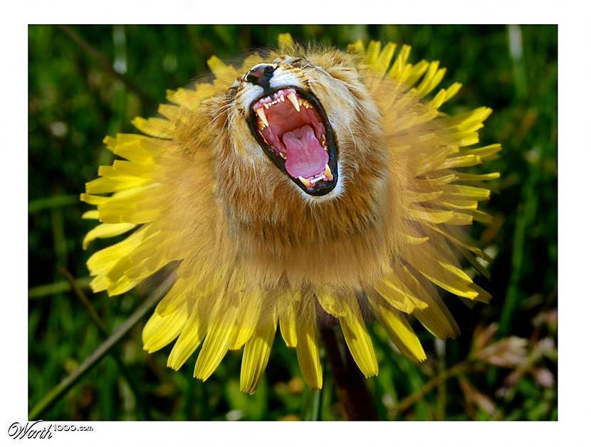 Autors: Nikon259 Augs vai dzīvnieks, vai abi kopā?