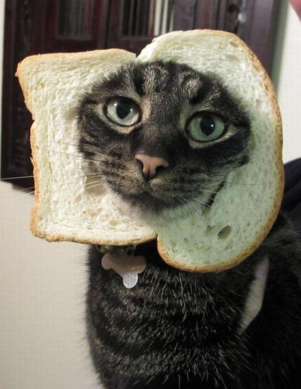 Autors: ORGAZMO Nyan cat??!!