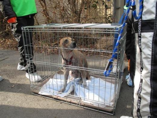 Žēl šo dzīvnieku Autors: Jeims0n Pazudušie dzīvnieki no Fukushimas