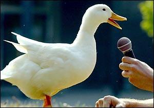Dzīvnieki spej paredzēt dabad... Autors: Budzisss Domāji,ka esi gudrs?  --> padomā vēlreiz :D