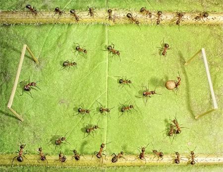 Autors: Fosilija Rēcīgas bildes ar skudrām.