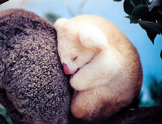 Autors: danabuckina Ļoti mīļi dzīvnieciņi!