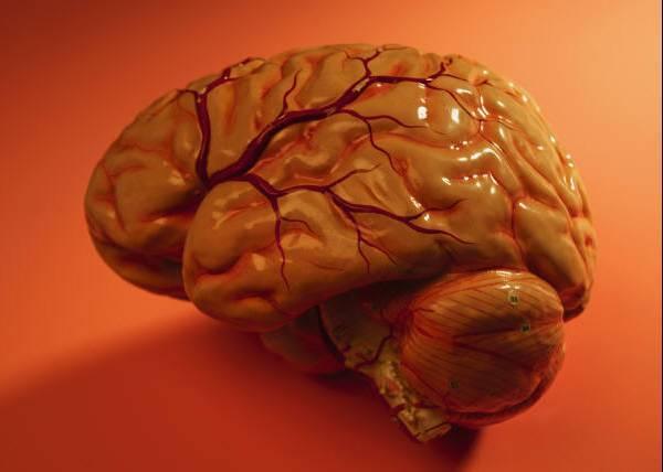 Smadzenes kas paliek... Autors: Karalis Jānis 5 Brīnumainas lietas ,ko spēj cilvēka prāts 2