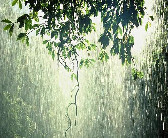 Rasas un lietus savākšana... Autors: MoonWolf Izdzīvošana: 3. daļa (Ūdens)