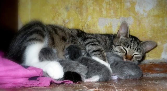 Autors: MsAlise Piedzima kaķēni