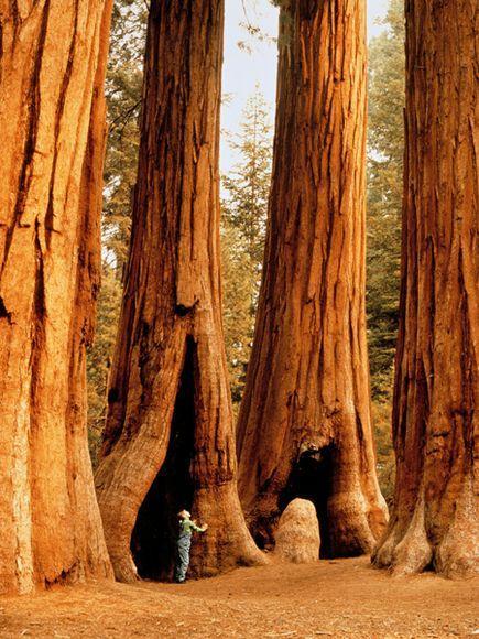 Sequoia Nacionālais parks... Autors: Fosilija 10 Interesantas tūrisma vietas !!!