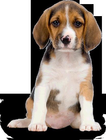 9 Autors: momoo999 suņu mīļiem
