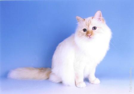8 Autors: momoo999 kaķu milētājiem 2