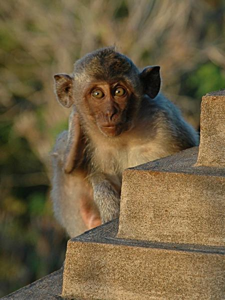 5nbspJa jūs dodaties... Autors: Persija Indonēzijas sala - Bali
