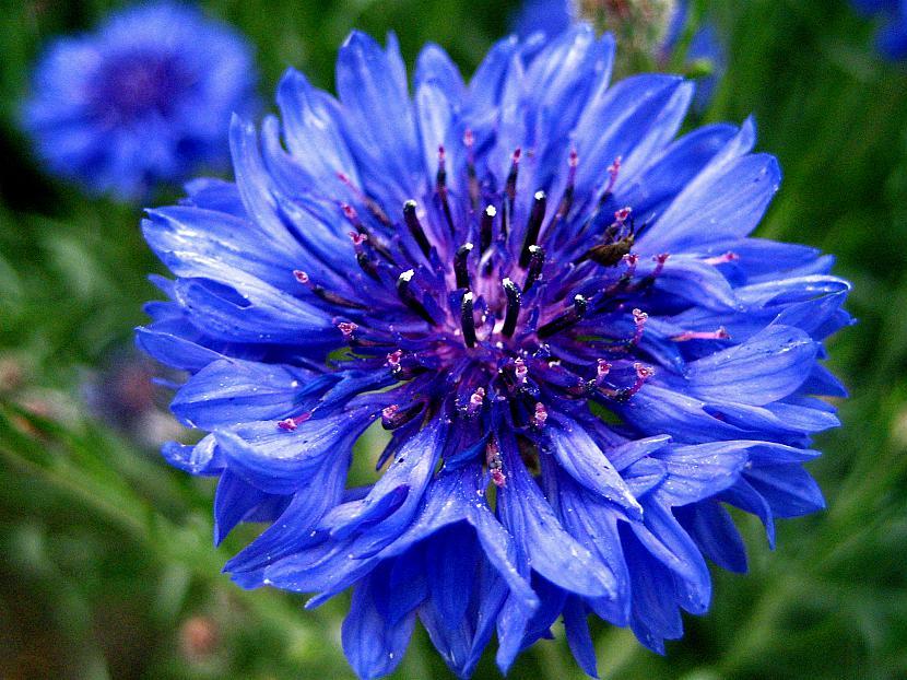 Pirmkārt ieraugot ziedus mēs... Autors: eozz Ziedu ietekme uz sievietēm