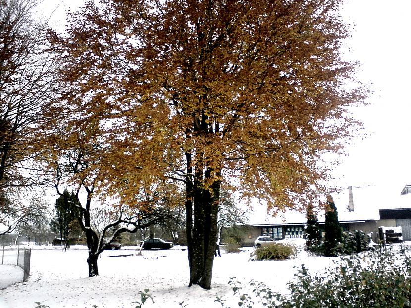 Autors: Pizhix First snow.