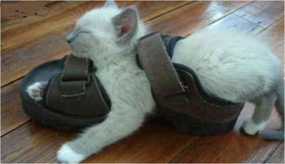 Autors: crazyfly Kur guļ kaķi ??