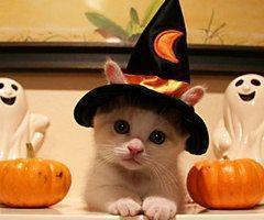 Autors: kikk Halloween