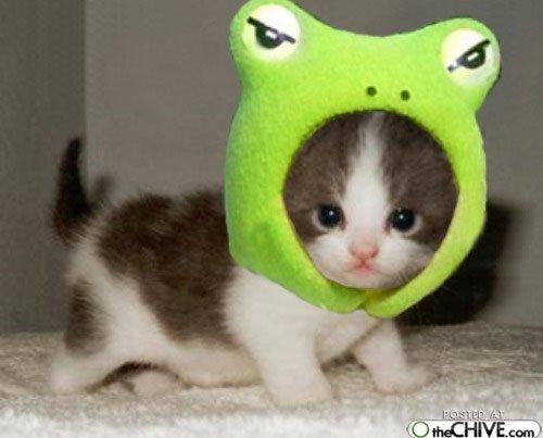 Es varde  Autors: gopniks2 Smieklīgie kaķi !