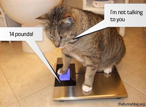 Mazliet par dauzd paēdu  Autors: gopniks2 Smieklīgie kaķi !