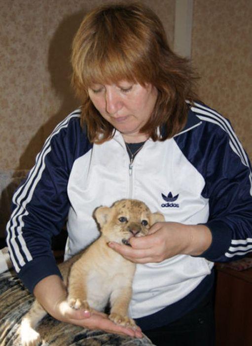 """Autors: fcsc Tā ir Kiara pirmā """"Liliger"""" kaķene."""
