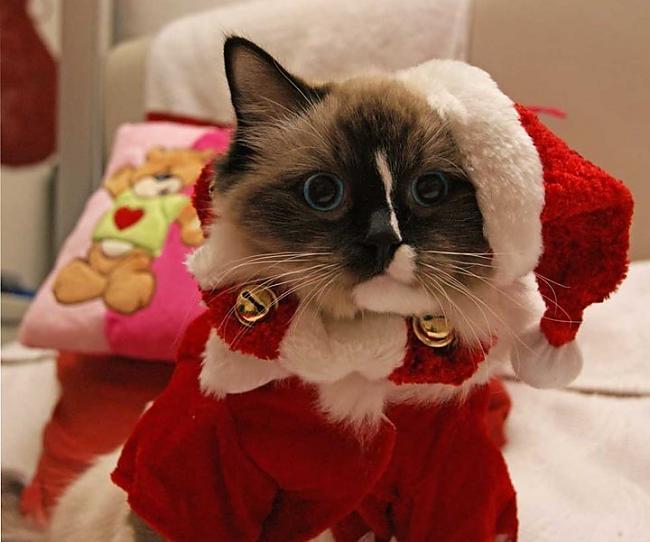 meow Autors: meow1212 Ziemassvētku bilžu paka-apskati!