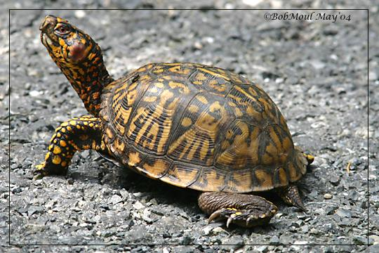 Bruņurupucis var elpot caur... Autors: Degnams Faktiņi