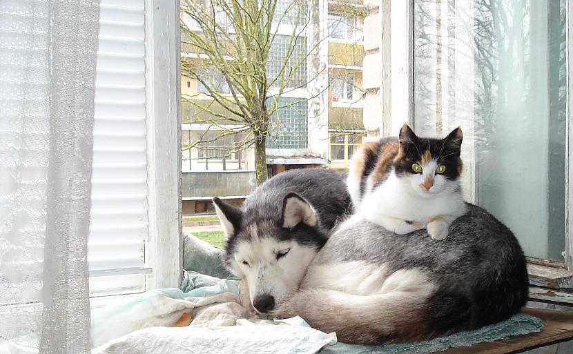 Autors: zobusāpes Apgāžam pieņēmumus... jeb ''Kā suns ar kaķi
