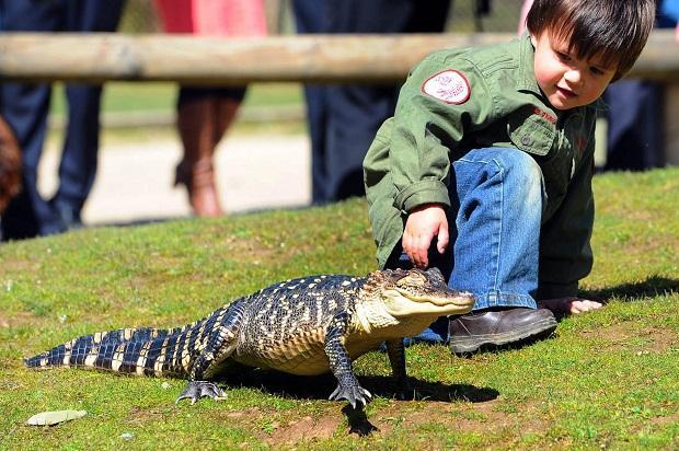quotApkārtējie mums pastāvīgi... Autors: R1DZ1N1EKS Pats jaunākais čūsku savaldītājs.