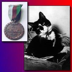 Otrajā pasaules karā Anglijas... Autors: Kaprālis Fakti par kaķiem
