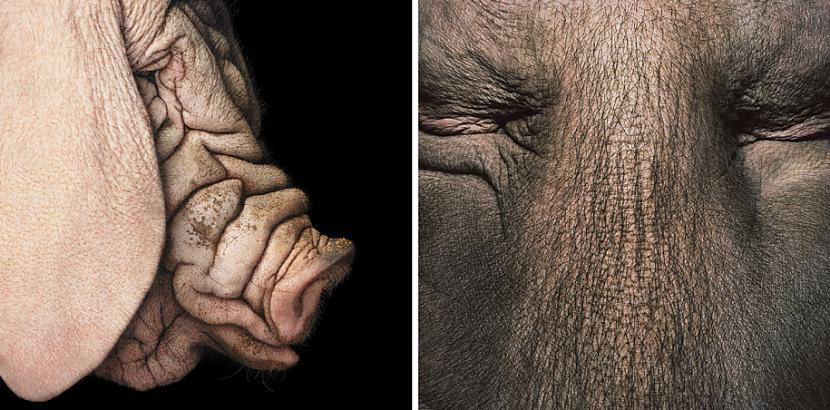 Fleča iepriekscaronējos darbos... Autors: Fosilija Dzīvnieku cilvēciskā puse