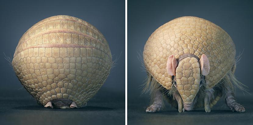 Lai dzīvnieki justos pēc... Autors: Fosilija Dzīvnieku cilvēciskā puse